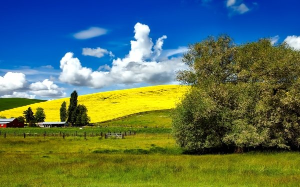 Photography Landscape Hill Tree Cloud Sky Rapeseed HD Wallpaper   Background Image