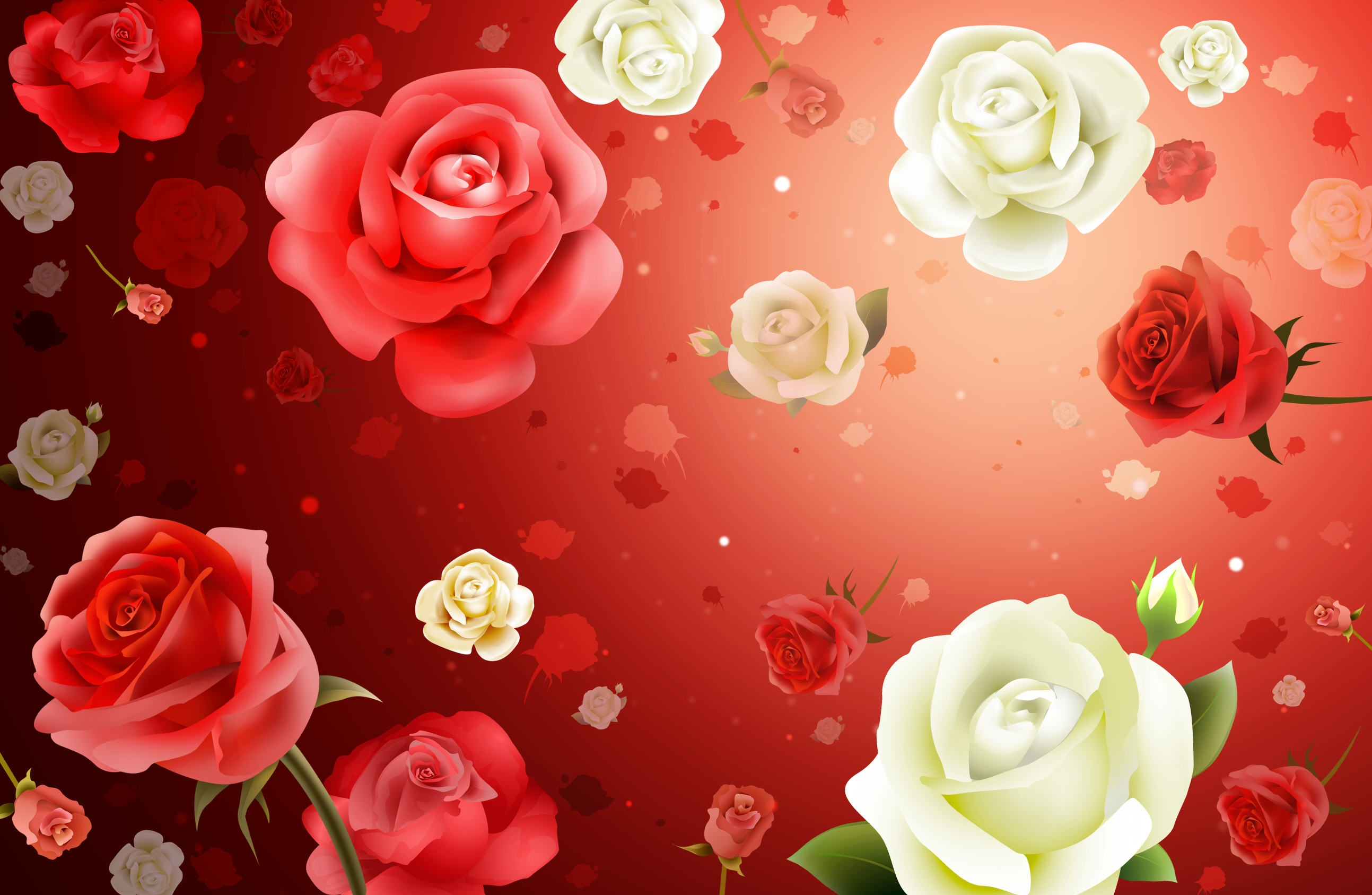Pink And White Roses Hd Wallpaper Background Image 2587x1687
