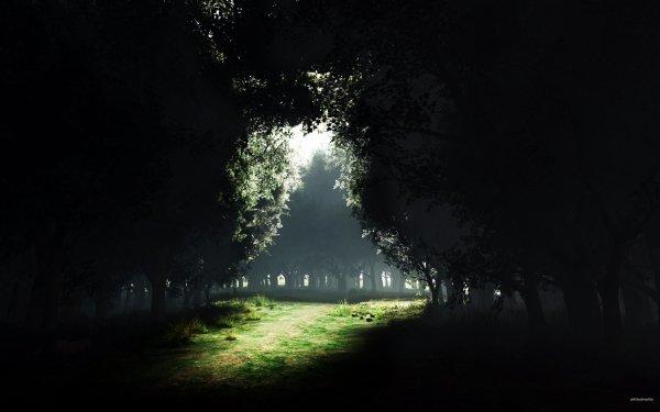 Earth Forest Dark Meadow HD Wallpaper | Background Image