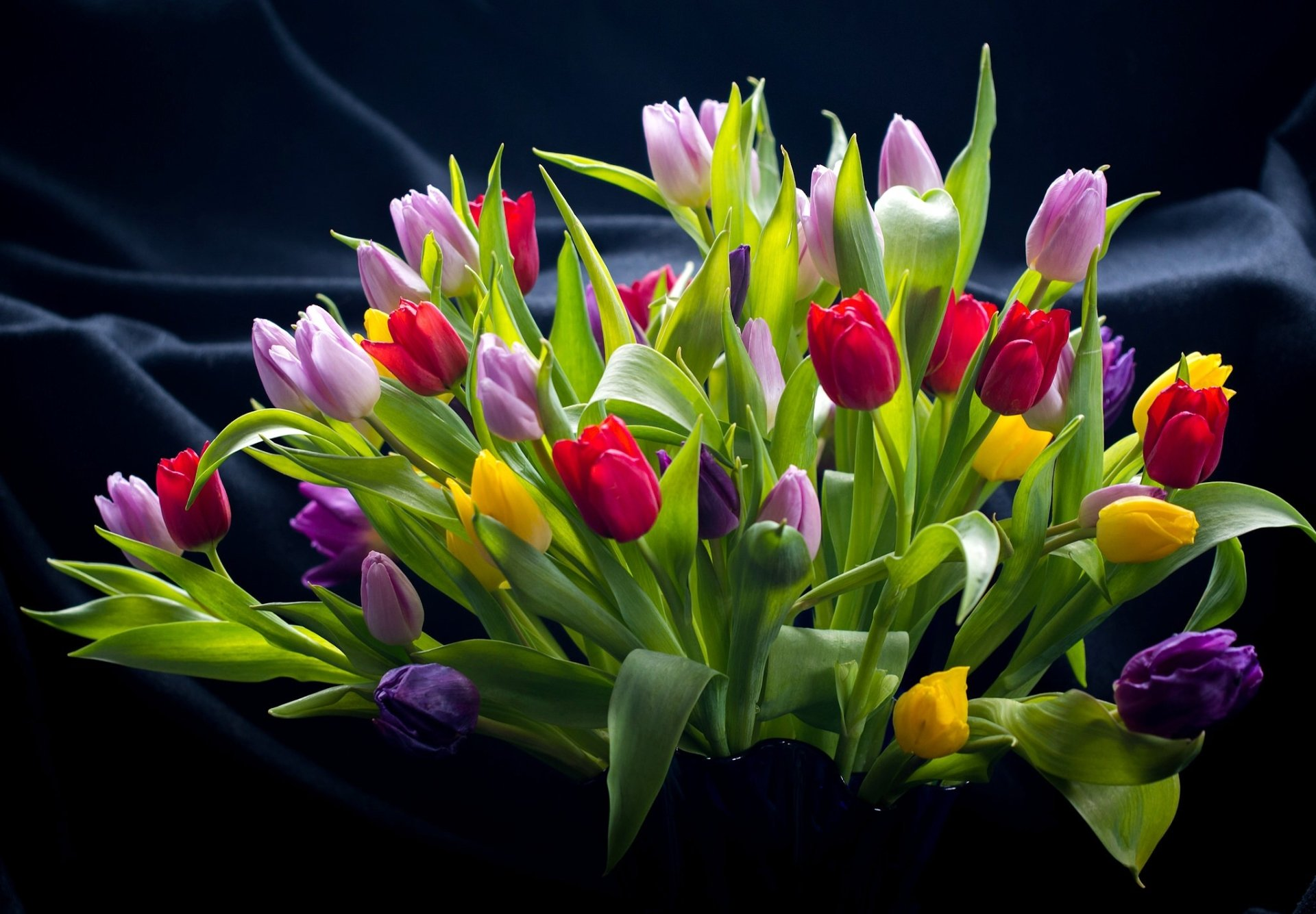 Man Made - Flower  Still Life Colors Tulip Colorful Wallpaper