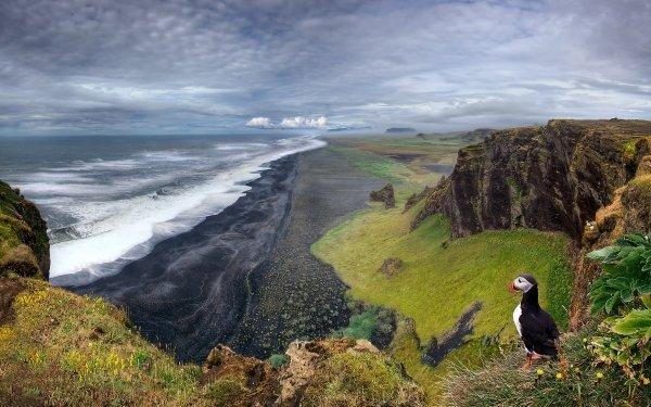 Earth Landscape Nature Horizon Puffin Cloud Sky Ocean Beach HD Wallpaper | Background Image