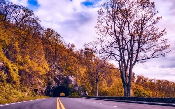 Man Made Tunnel Tree Road Fall HD Wallpaper | Background Image