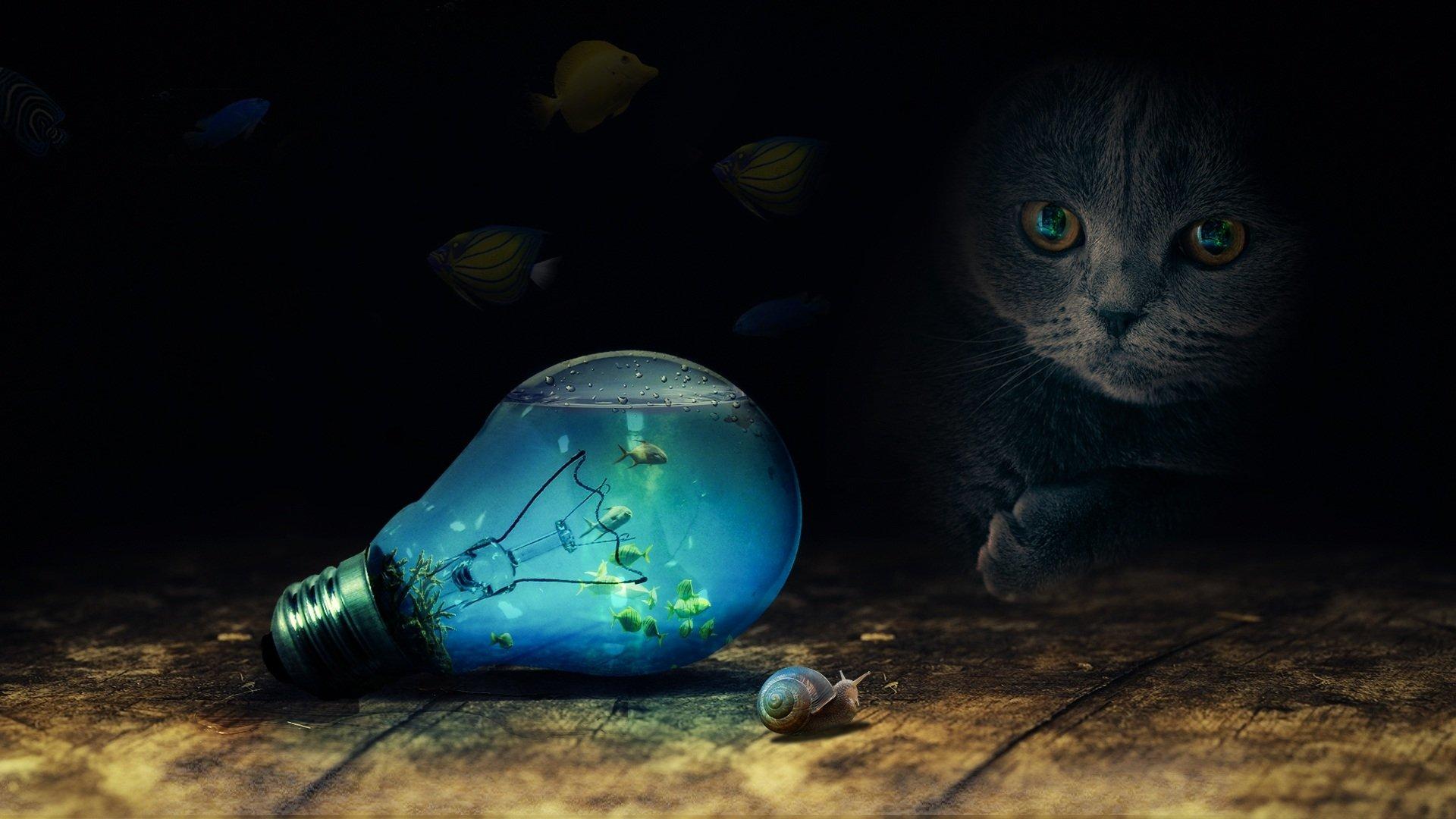 Photography - Manipulation  Cat Light Bulb Snail Fish Wallpaper