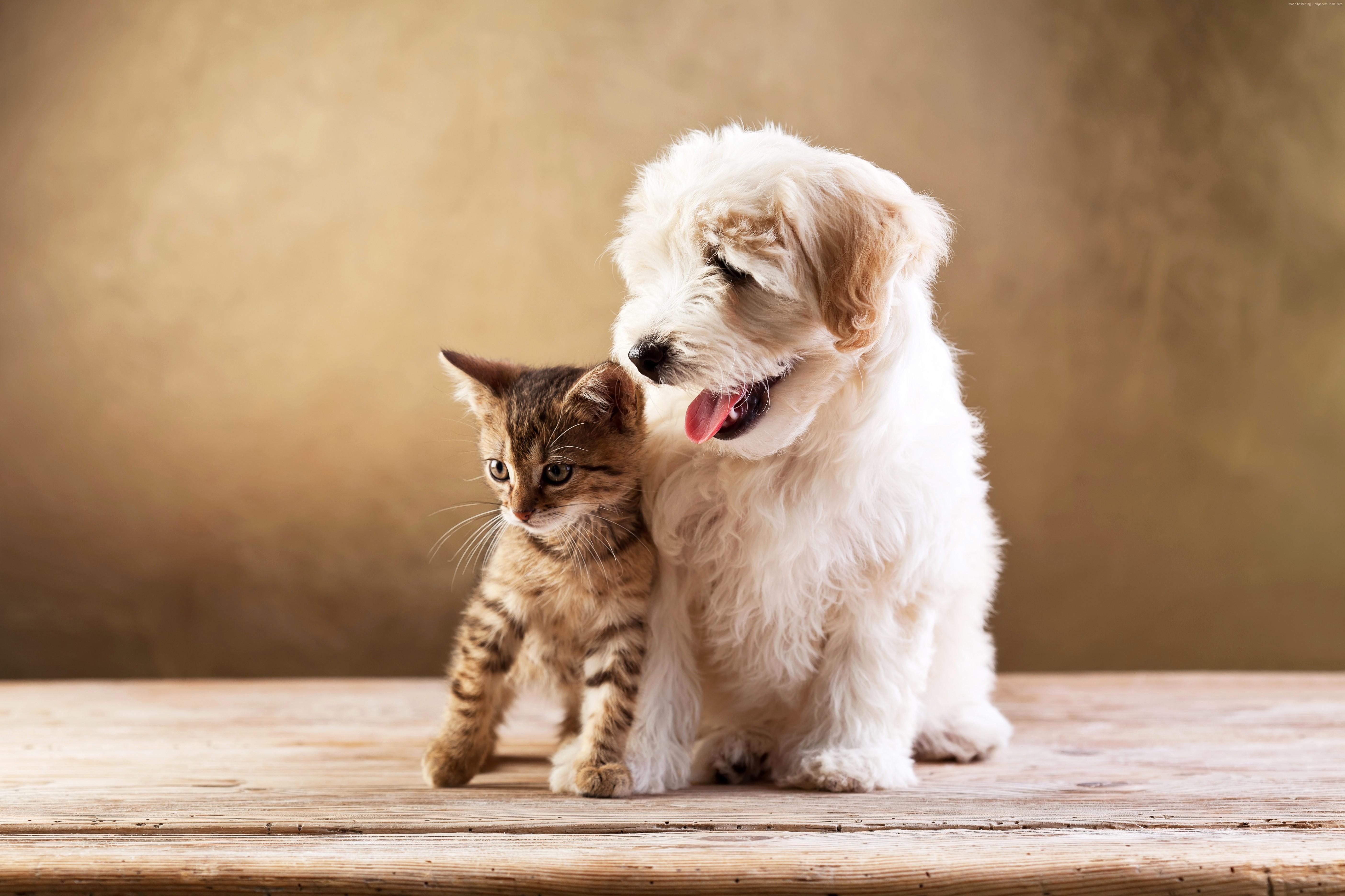 Bokeh Border Collie Cat Cute Dog HD Wallpaper