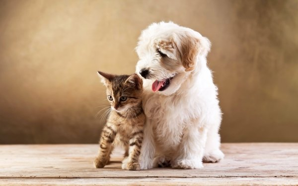 Animal Cat & Dog Dog Kitten Cute Friend Baby Animal Pet HD Wallpaper | Background Image
