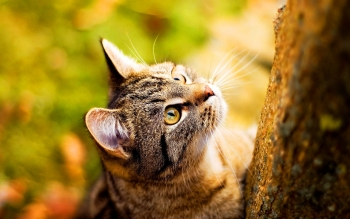 Animalia - Gato Wallpapers and Backgrounds ID : 86545
