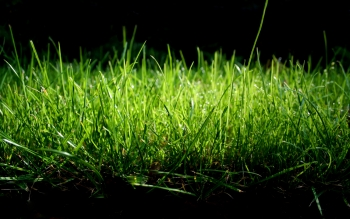 Earth - Grass Wallpapers and Backgrounds ID : 86637