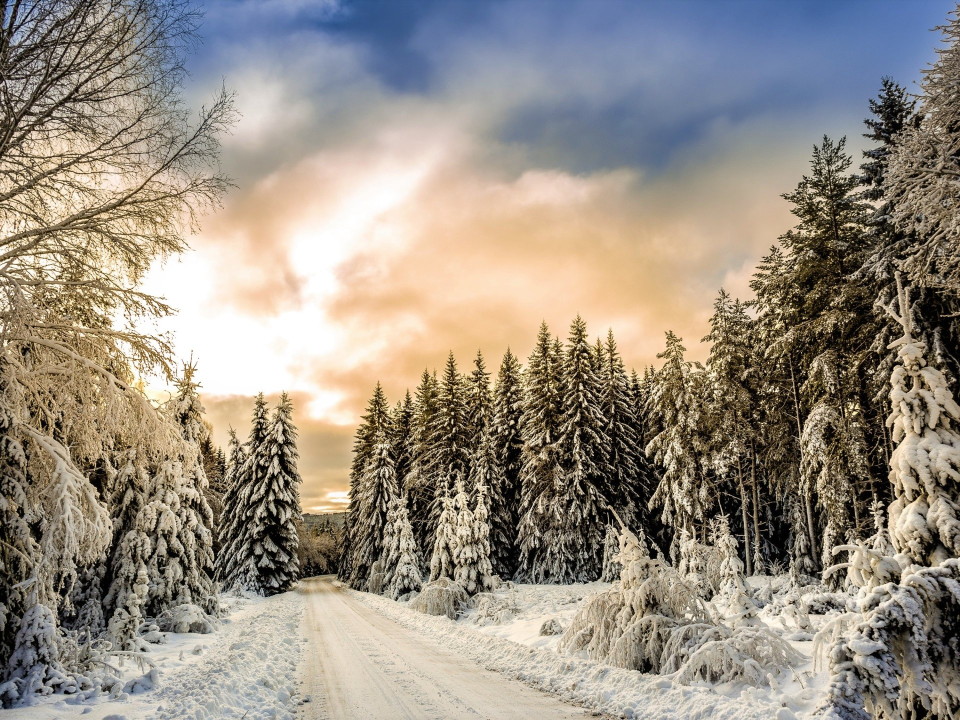 Man Made - Road  Winter Snow Tree Forest Wallpaper
