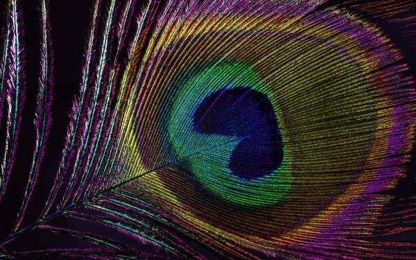 Photography Feather Colors Macro HD Wallpaper   Background Image