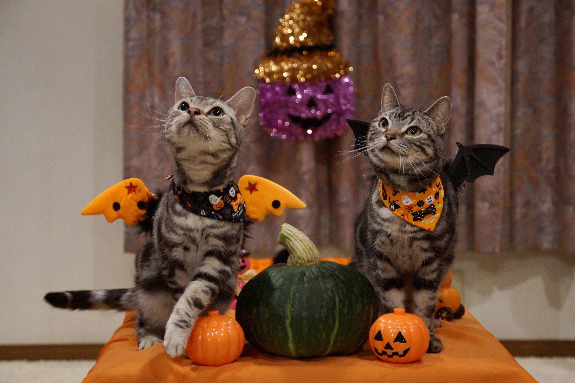 Holiday - Halloween  Cat Wallpaper