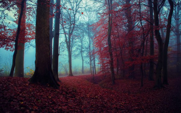 Earth Forest Fall Foliage HD Wallpaper | Background Image