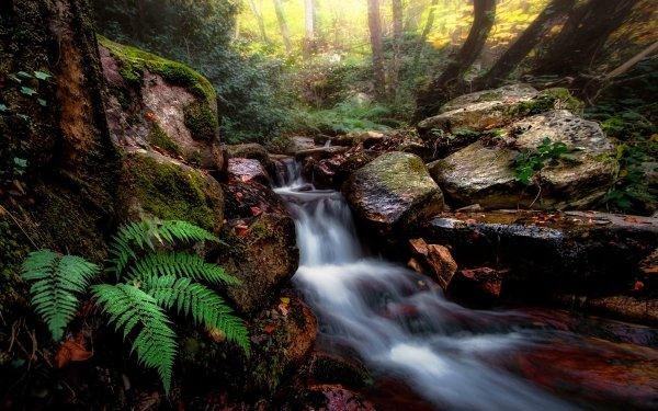Earth Stream Nature Rock Fern HD Wallpaper | Background Image