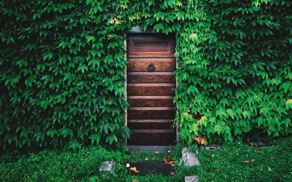 Man Made Door House Ivy Green HD Wallpaper | Background Image