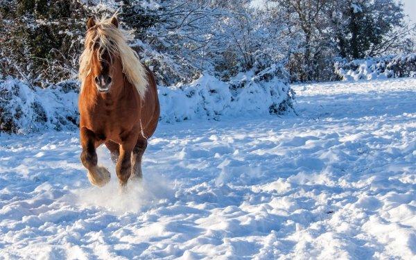 Animal Horse Winter Snow HD Wallpaper | Background Image