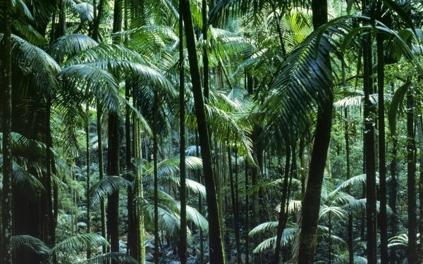 Earth Jungle Nature Tree Forest Green Vegetation HD Wallpaper   Background Image