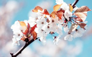 Spring Flowers Images Stock Photos amp Vectors  Shutterstock