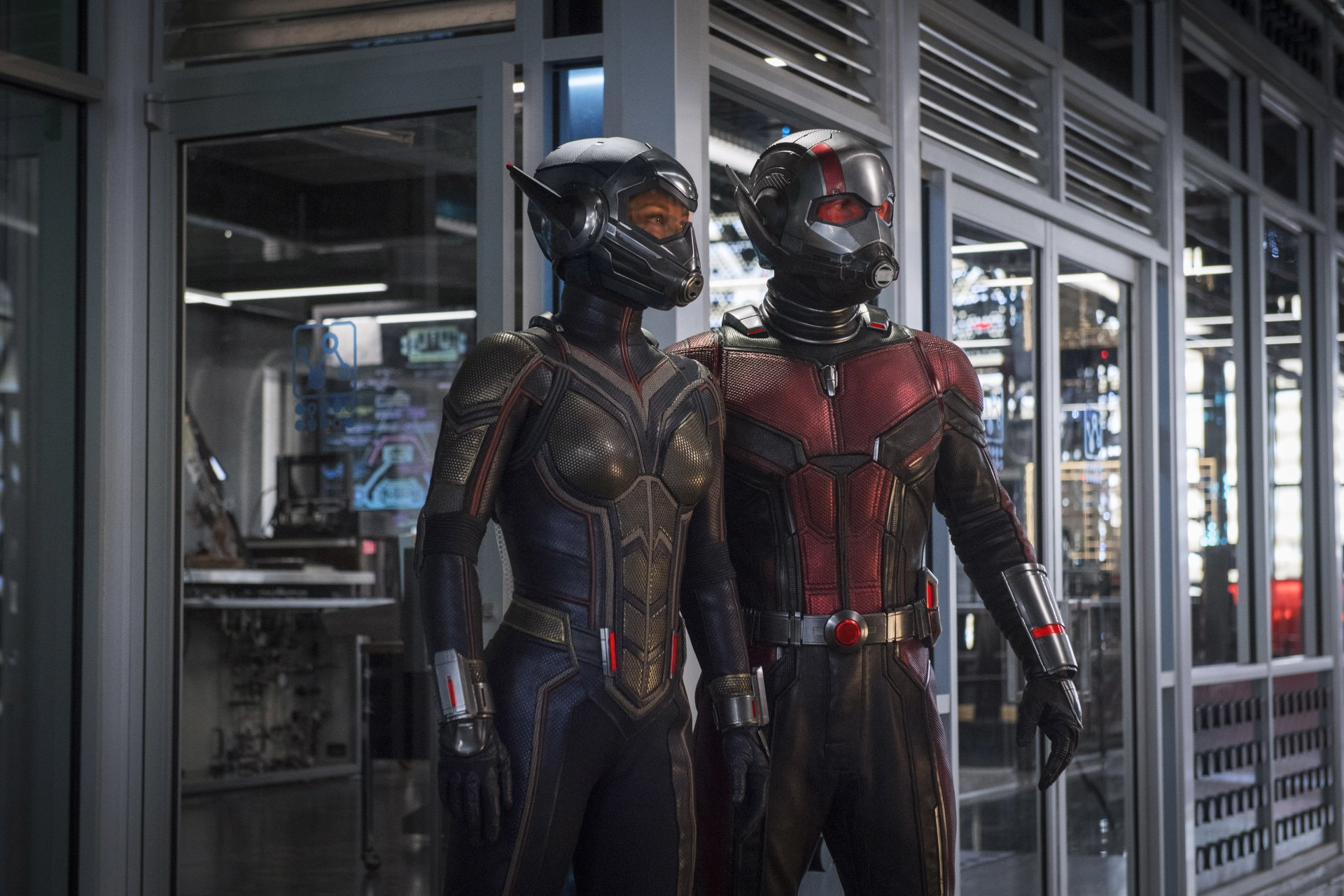 Movie - Ant-Man and the Wasp  Ant-Man Wasp (Marvel Comics) Paul Rudd Evangeline Lilly Wallpaper