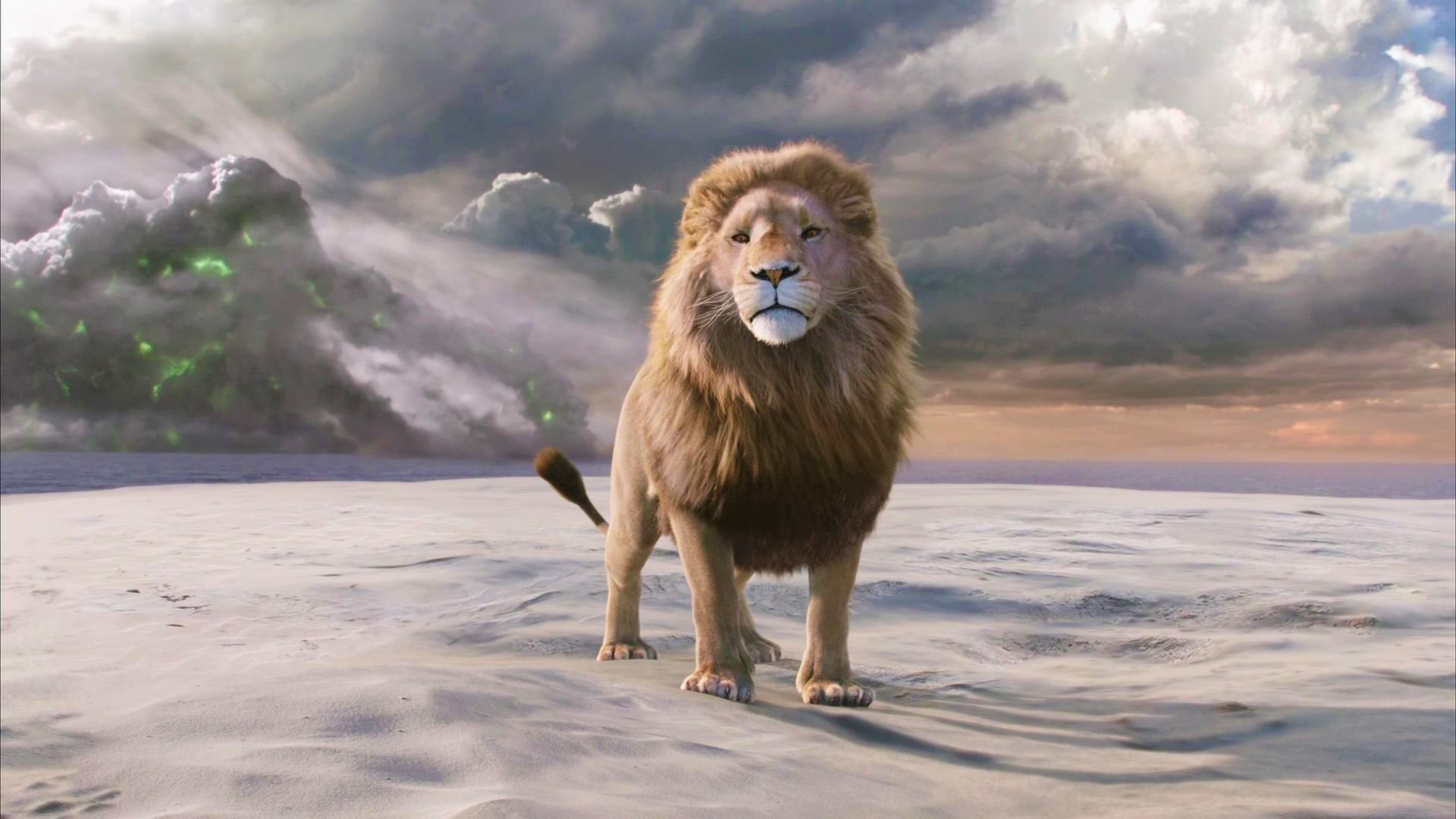 Aslan The Lion Hd Wallpaper Background Image 1920x1080 Id