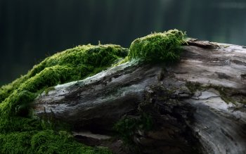 Tierra - Moss Wallpapers and Backgrounds ID : 89929