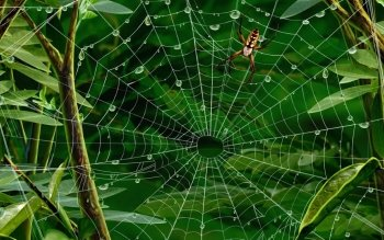 Animal - Spider Wallpapers and Backgrounds ID : 89969