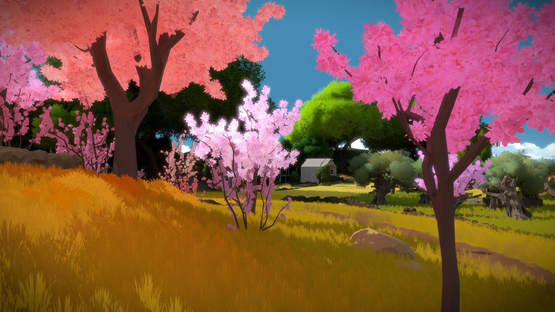 Video Game - The Witness  Wallpaper