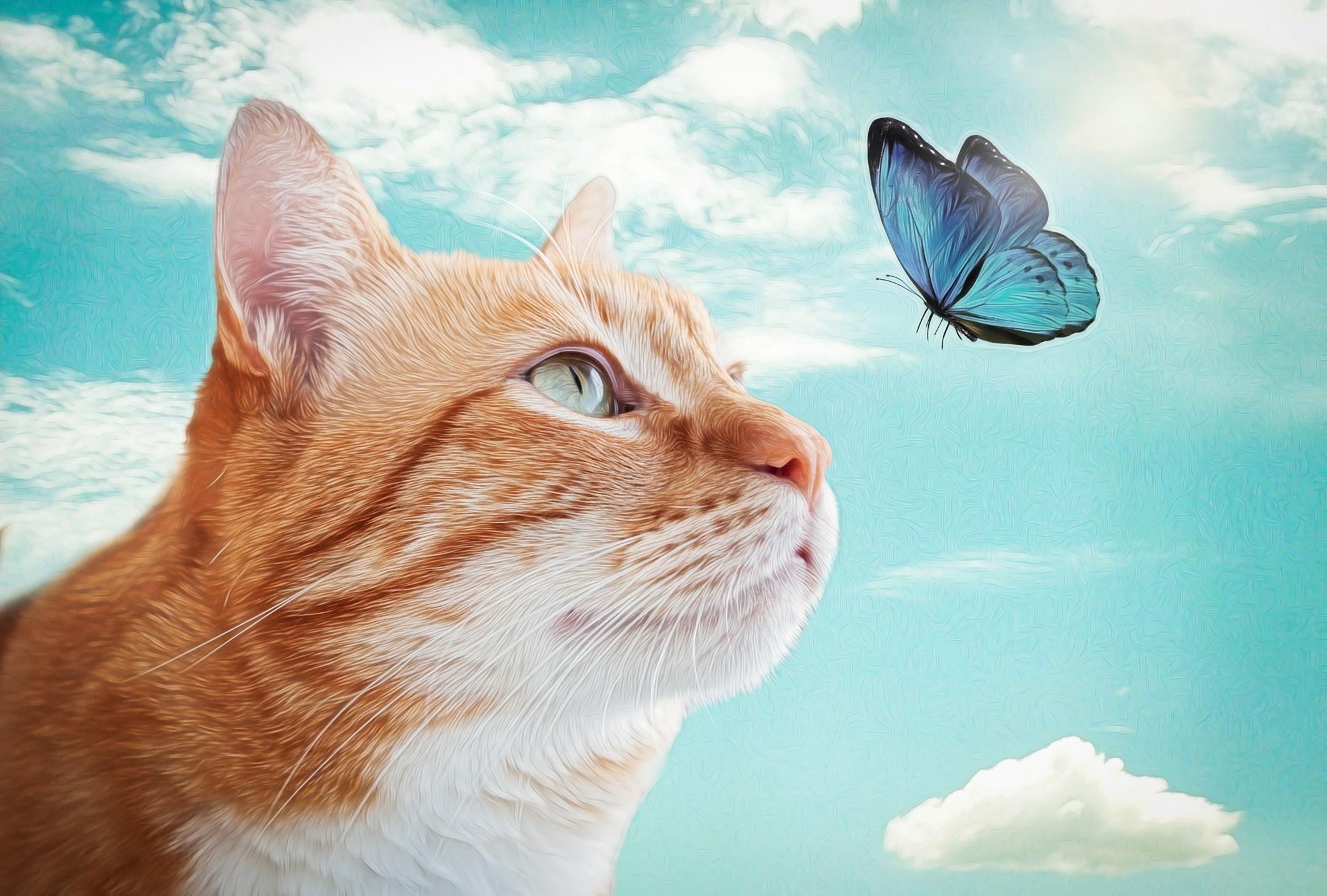 Best Wallpaper Cat Butterfly - 911512  Collection_707989 .jpg