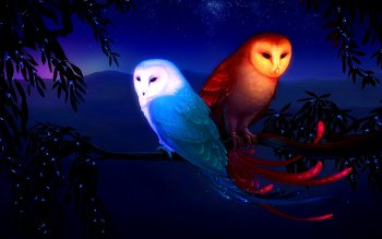 Animal - Owl Wallpapers and Backgrounds ID : 91287