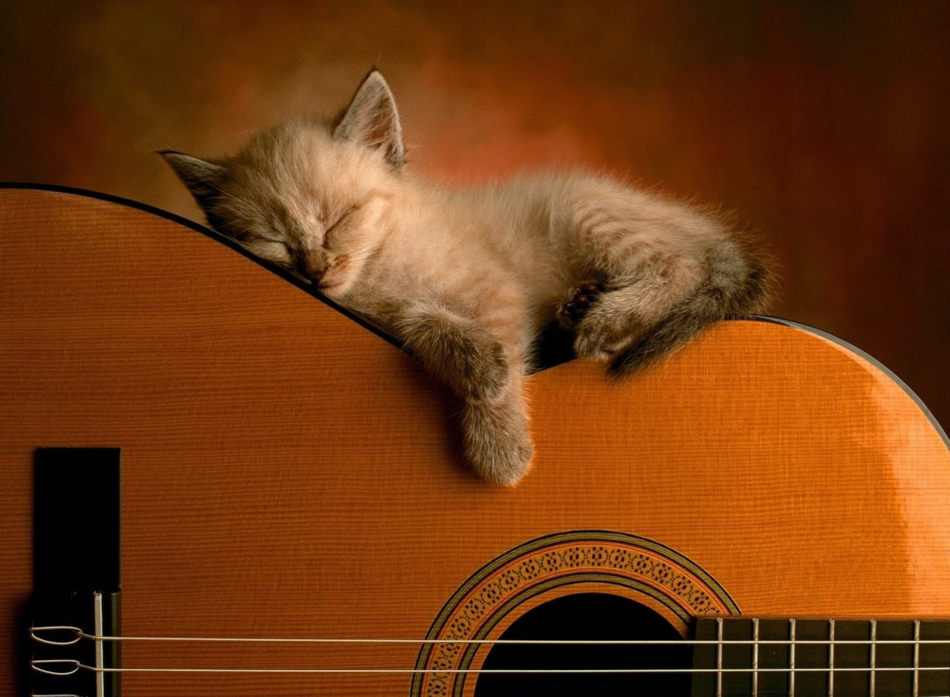 cute kitten sleeping on a guitar hd wallpaper | background image