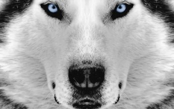 Animal - Dog Wallpapers and Backgrounds ID : 91837