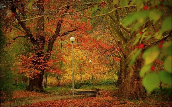 Fotografía Parque Otoño Foliage Street Light Árbol Steps Fondo de pantalla HD | Fondo de Escritorio