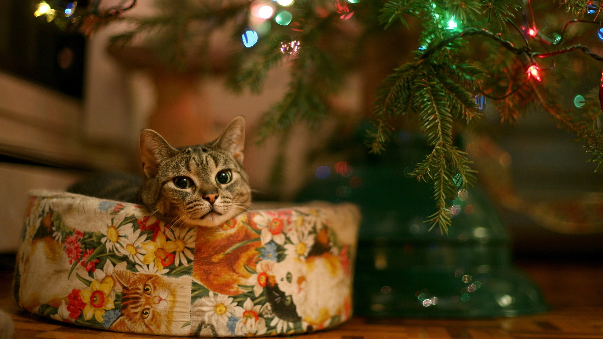 Holiday - Christmas  Cat Christmas Lights Light Wallpaper