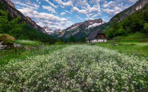 Man Made House Buildings Cottage Meadow Spring Flower Mountain HD Wallpaper | Background Image