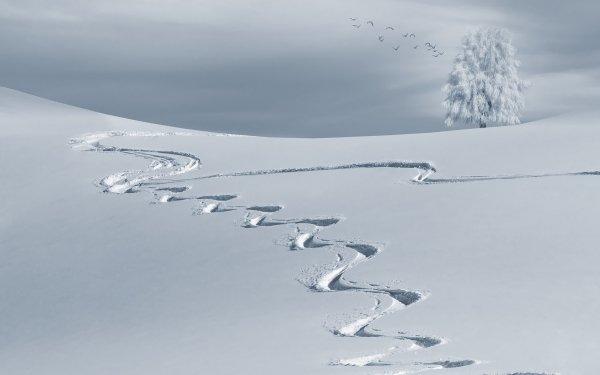 Earth Winter Tracks Tree Snow Flock Of Birds HD Wallpaper | Background Image