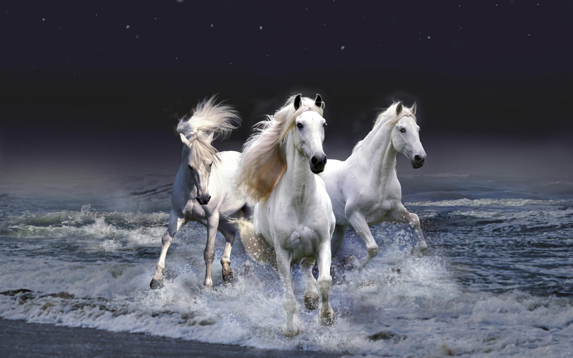 Animal - Horse  Artistic Animal Fantasy White Ocean Sea Wallpaper