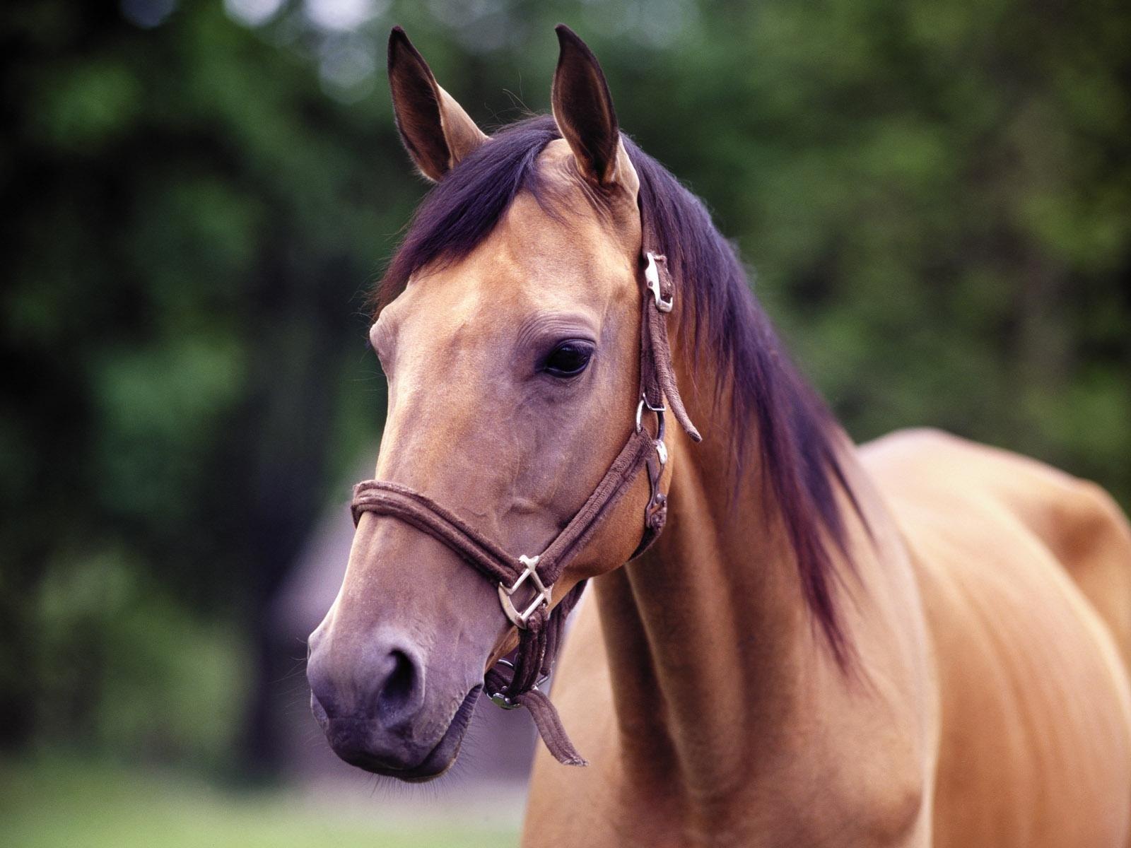 Dierenrijk - Paard  Wallpaper