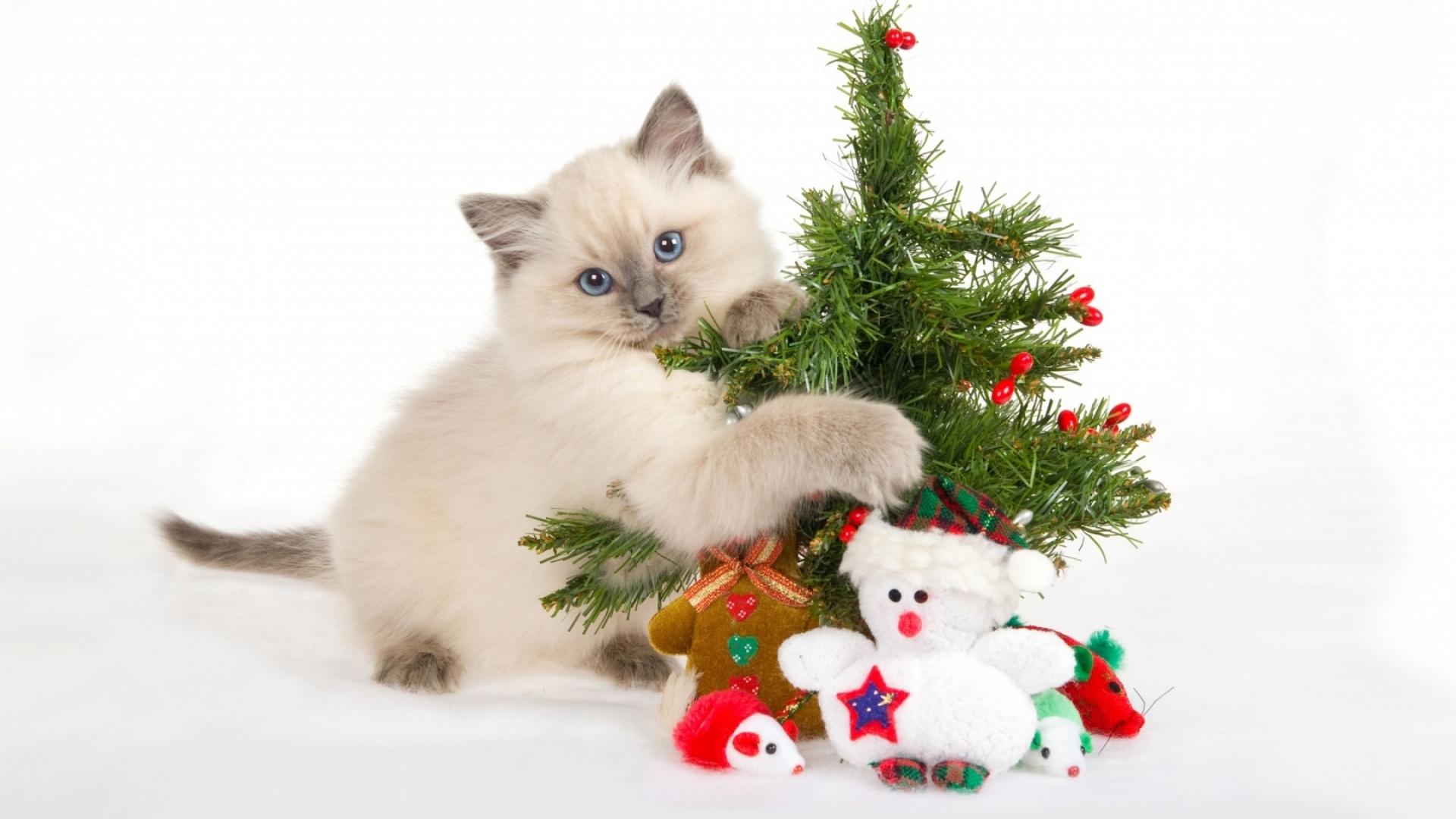 Christmas Hd Wallpaper Background Image 1920x1080 Id 95887
