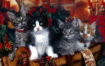 Animal - Cat Wallpapers and Backgrounds ID : 95947