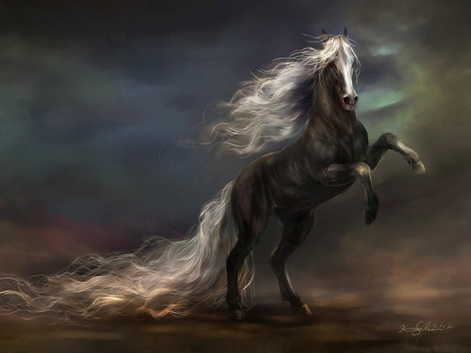 Animal - Horse  Animal Black Wallpaper