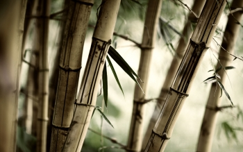 Earth - Bamboo Wallpapers and Backgrounds ID : 96775