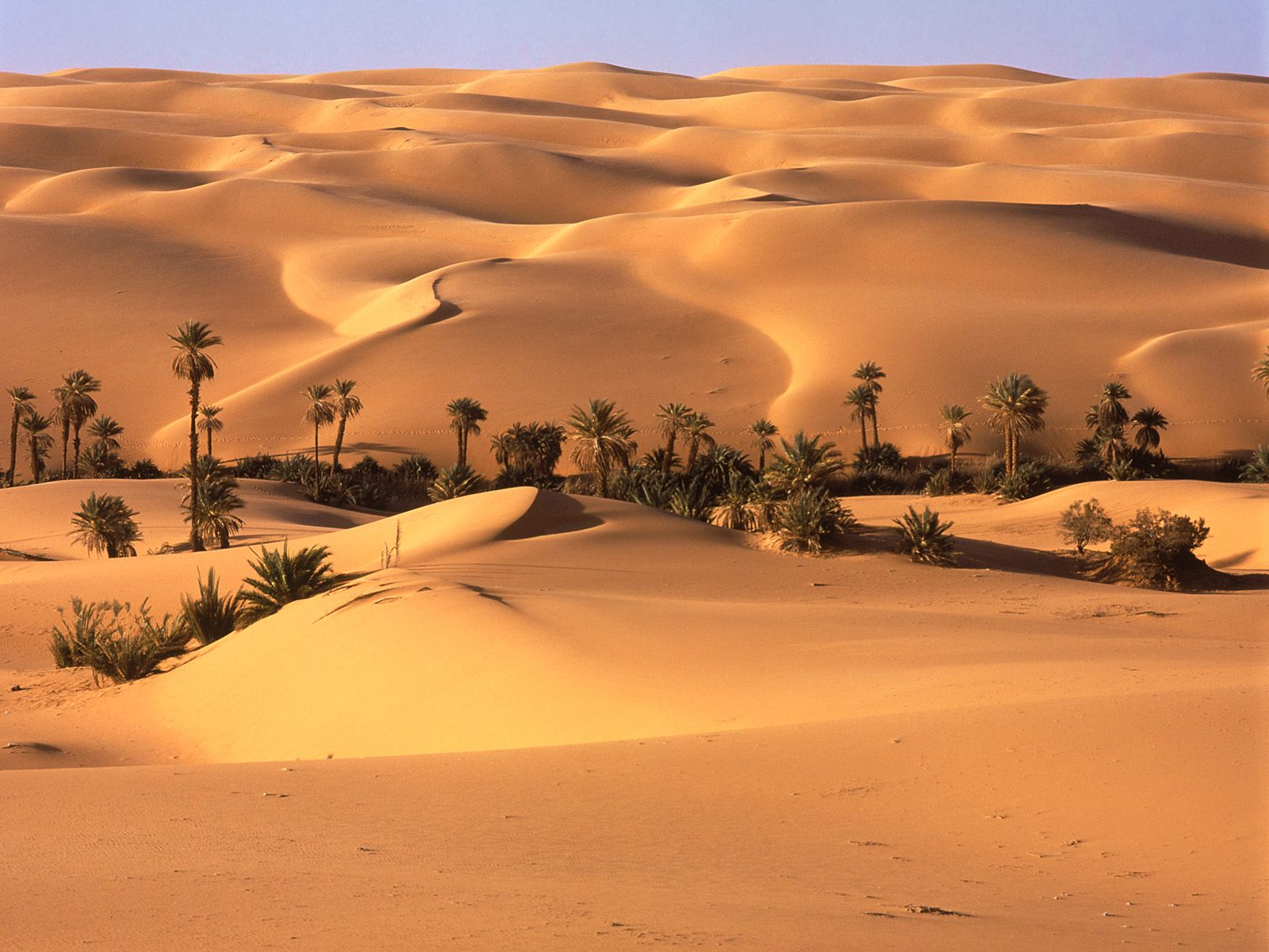 Earth - Desert Wallpaper