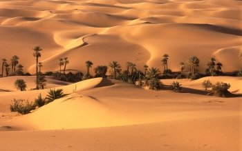 Earth - Desert Wallpapers and Backgrounds ID : 96995