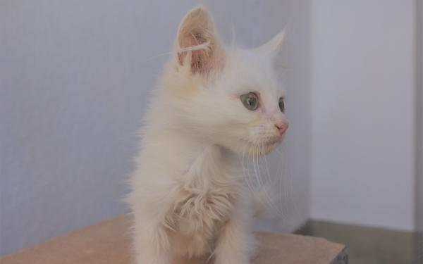 Animal Cat Cats Pet Kitten HD Wallpaper | Background Image