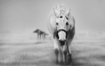 Animal - Horse Wallpapers and Backgrounds ID : 97967