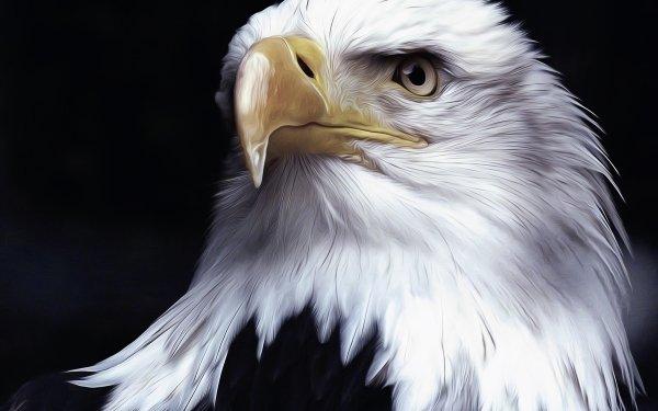 Animal Bald Eagle Birds Eagles Bird Oil Painting Artistic Digital Art HD Wallpaper | Background Image